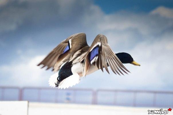068/365 - Take off