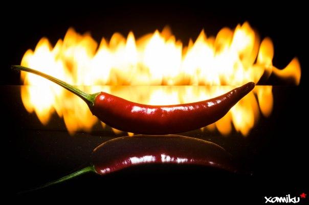 121/365 - Red Hot Chili Pepper