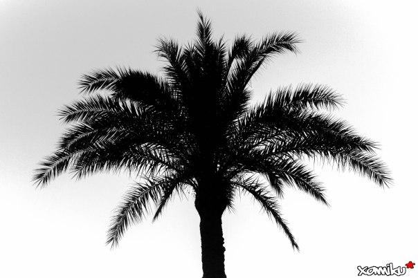 Proyecto 365 - 207 - Una simple palmera
