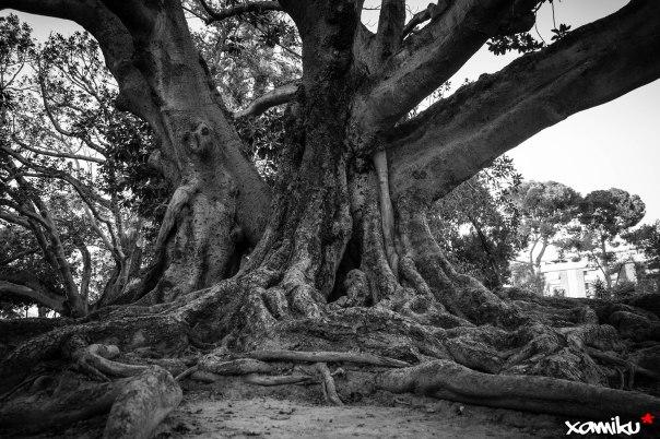 Proyecto 365 - 308 - El sabio Ficus